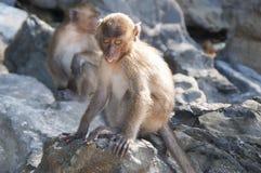 Affen auf den Stränden von Thailand Stockbild