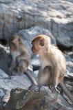 Affen auf den Stränden von Thailand Lizenzfreie Stockfotografie