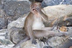 Affen auf den Stränden von Thailand Lizenzfreie Stockbilder