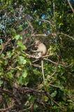Affen auf der Insel Koh Ped Stockbilder