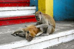 Affen auf der Treppe Lizenzfreie Stockbilder