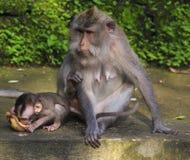 Affen auf einem Tempel Lizenzfreie Stockfotos
