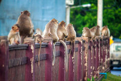 Affen auf einem Zaun Lizenzfreies Stockfoto