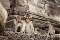 Affen auf Gebäuden Stockfotografie