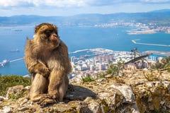 Affen auf Gibraltar Lizenzfreie Stockbilder