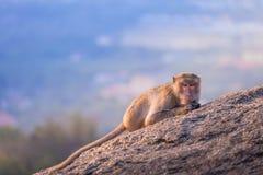 Affen auf Hua Hin-Standpunkt Lizenzfreie Stockfotografie