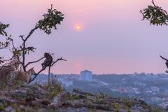 Affen auf Hua Hin-Standpunkt Stockfoto
