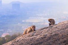 Affen auf Hua Hin-Standpunkt Lizenzfreies Stockfoto