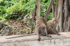 Affen auf Steinwand im Garten thailand Stockfoto