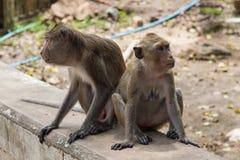 Affen auf Steinwand im Garten thailand Lizenzfreies Stockbild