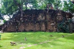 Affen auf Tempel Sans Phra Kan Stockfotos