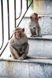 Affen auf Treppenhaus Lizenzfreies Stockbild