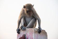 Affen auf weißem Hintergrund Lizenzfreie Stockbilder