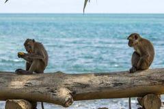 Affen auf Zaun Stockfotografie
