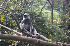 Affen bei Sigiriya in Sri Lanka Lizenzfreies Stockbild