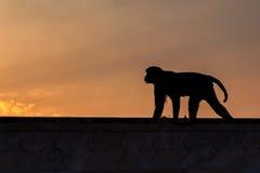 Affen in der indischen Stadt Stockfotografie
