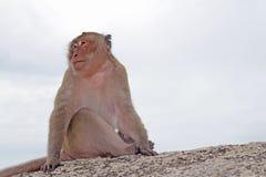 Affen in der Natur Lizenzfreies Stockfoto