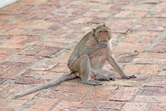 Affen in der Natur Stockfotografie