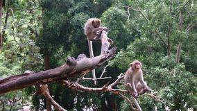 Affen, die auf dem Baum sitzen Stockbilder