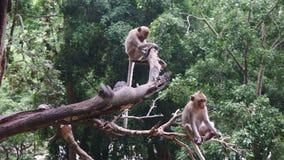 Affen, die auf dem Baum sitzen Stockfotos