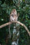 Affen, die auf Flöhen und Zecken auf konkretem Zaun im PA überprüfen Stockfotos