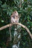 Affen, die auf Flöhen und Zecken auf konkretem Zaun im PA überprüfen Stockbilder