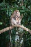 Affen, die auf Flöhen und Zecken auf konkretem Zaun im PA überprüfen Stockbild