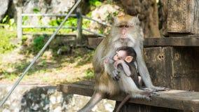 Affen, die auf Treppenhaus, Reinheit der Liebe sitzen Lizenzfreie Stockbilder