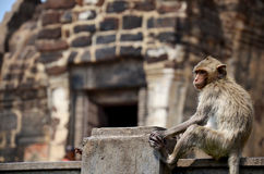 Affen, die bei Phra Prang Samyod spielen Lizenzfreie Stockbilder