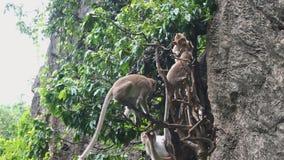Affen, die den Baum klettern Stockbild