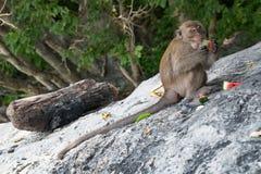 Affen, die Früchte auf Affe-Strand, Phi Phi Don-Insel essen Stockbilder