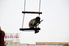 Affen, die am Garten von Schrein Phra Kal spielen Stockbilder