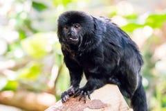 Affen, die mit unscharfem Hintergrund sitzen und essen Lizenzfreies Stockfoto