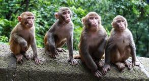 Affen in einem Park, guinzhou Provinz, Porzellan Lizenzfreie Stockfotos