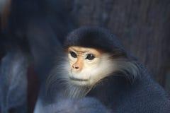 Affen in einem Zoo Lizenzfreies Stockbild
