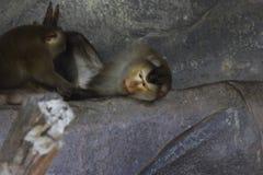 Affen in einem Zoo Lizenzfreies Stockfoto