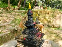 Affen essen Almosen im Gebiet des Affetempels, Kathmandu, Nepal stockfotografie
