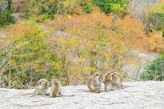 Affen haben Spaß auf ihren Tätigkeiten Lizenzfreie Stockbilder