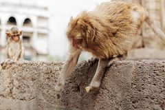 Affen halten Lebensmittel Lizenzfreie Stockbilder