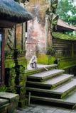Affen im Affewald, Bali Lizenzfreies Stockbild
