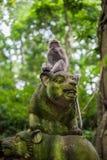Affen im Affewald, Bali Stockfoto