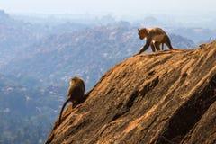 Affen im Berg Lizenzfreie Stockfotos