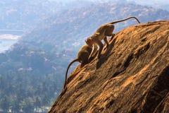 Affen im Berg Stockbilder