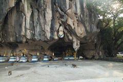 Affen im buddhistischen Tempel Stockbilder