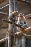 Affen Stockbild