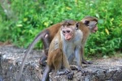 Affen im Park Stockbild