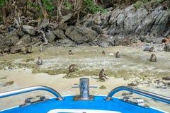 Affen leben auf Ufer in der Insel Lizenzfreies Stockbild