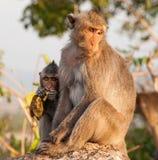 Affen mit Baby Lizenzfreies Stockbild