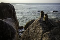 Affen morgens Lizenzfreie Stockfotografie