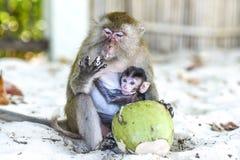 Affen Mutter und Baby, das auf einen Strand, Thailand isst Stockfotografie